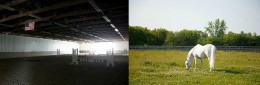 Chicago area horse training and great amenities