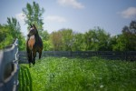 horse-in-field-farm-1