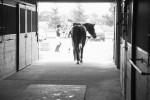 horse-stalls-boarding-chicago