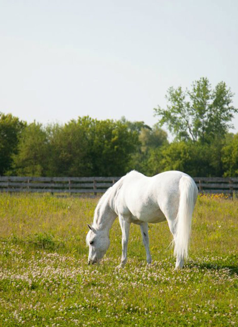 White Horse Field Canterbury Farm Canterbury Farm Chicago