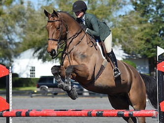 Canterbury Farm Kicks Off 2016 Show Season with Top Ribbons in Florida, Feature In The Plaid Horse