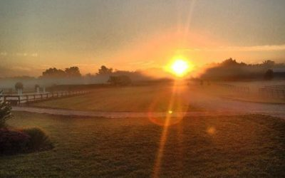 WGN Morning News visit Canterbury Farm!