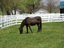 800px-John_Henry_Horse